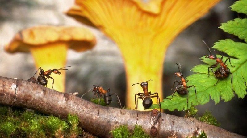 Organisation. Motiv:travle myrer i skovbund