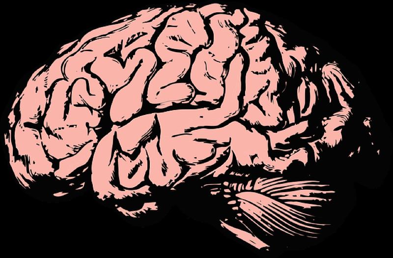 Motiv: Tegning af hjerne