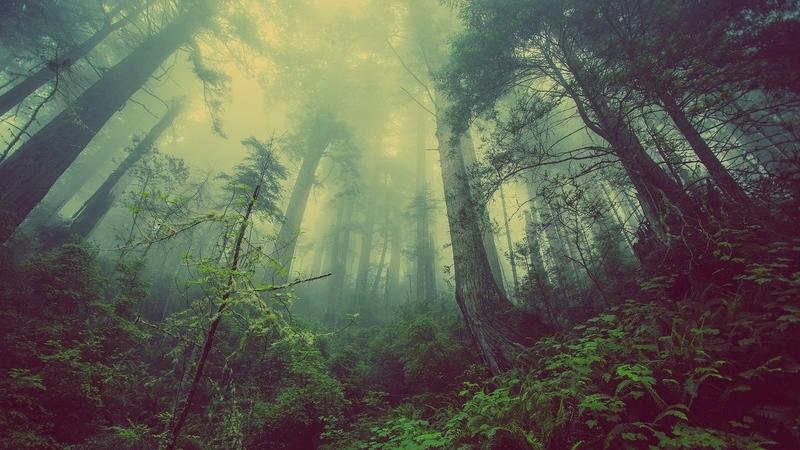 Min hjerne er som en tåget skov. Træerne er mine minder. Jeg ved de er der, men kan ikke se dem alle.